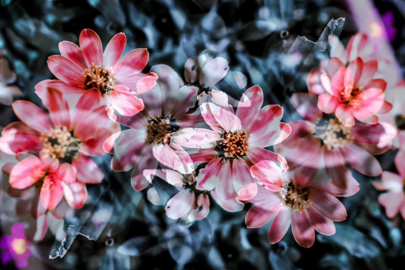 「揺れる花々」の写真