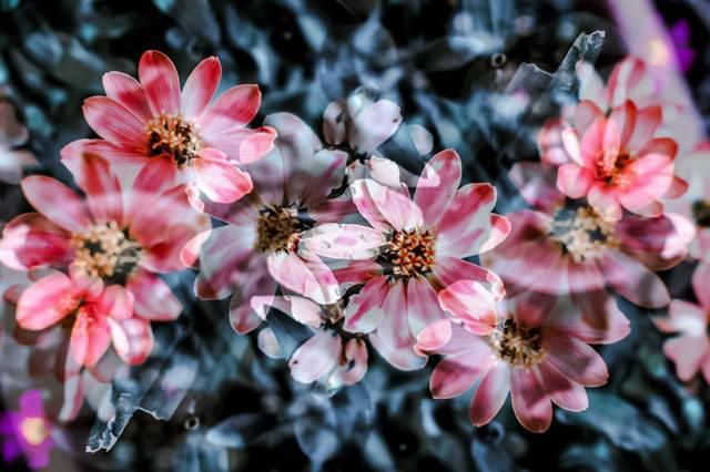 揺れる花々の写真