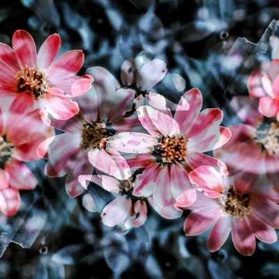 「揺れる花々」の写真素材