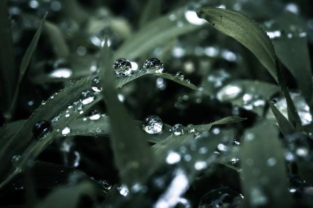 水玉の写真
