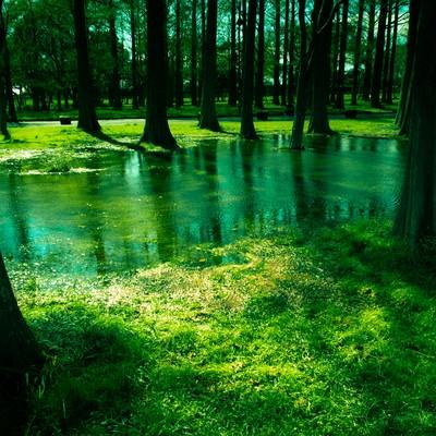 「水元公園の木々と水たまり」の写真素材
