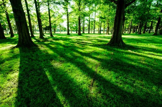 緑あふれる水元公園の写真