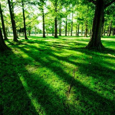 「緑あふれる水元公園」の写真素材