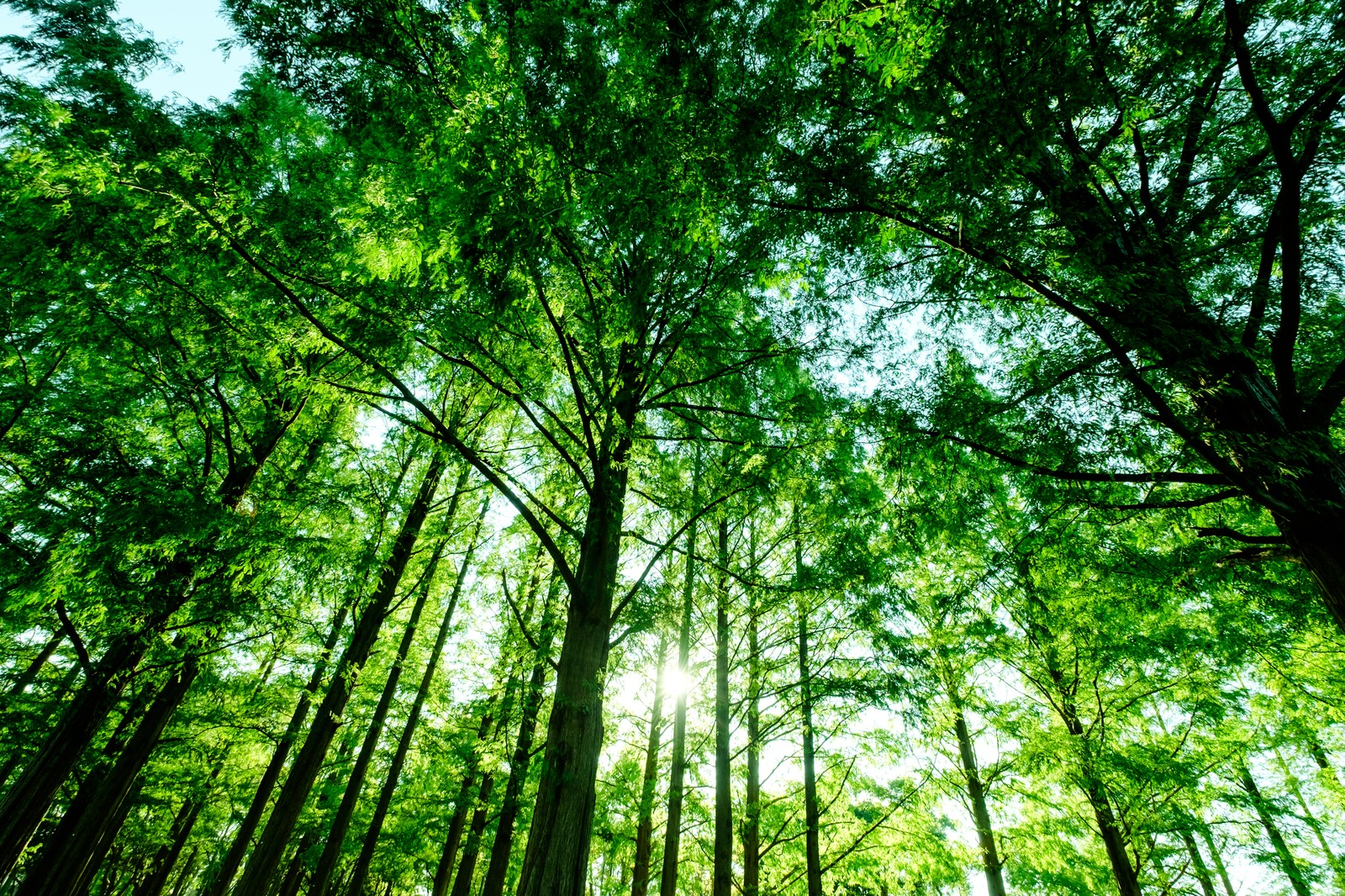 「新緑の森」の写真