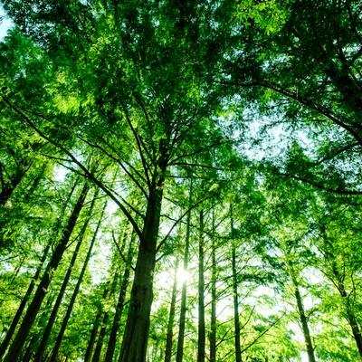 新緑の森の写真