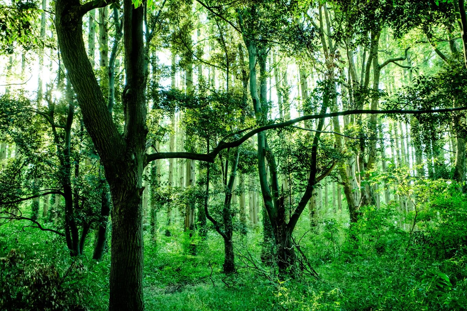 深い森の中|ぱくたそフリー素材