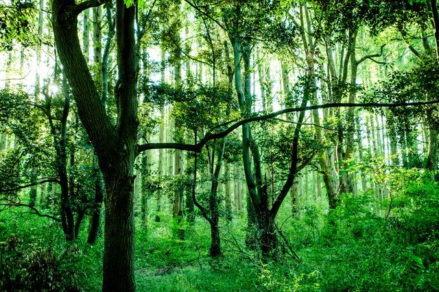 深い森の中