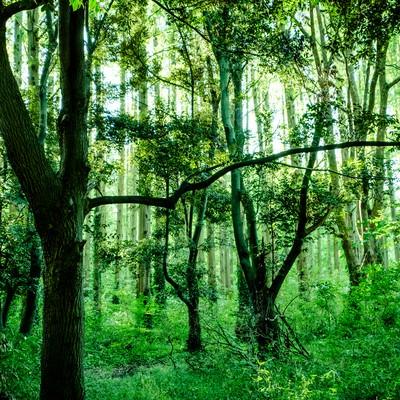 「深い森の中」の写真素材
