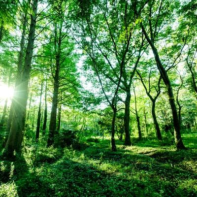 「森の中の生い茂る木々」の写真素材