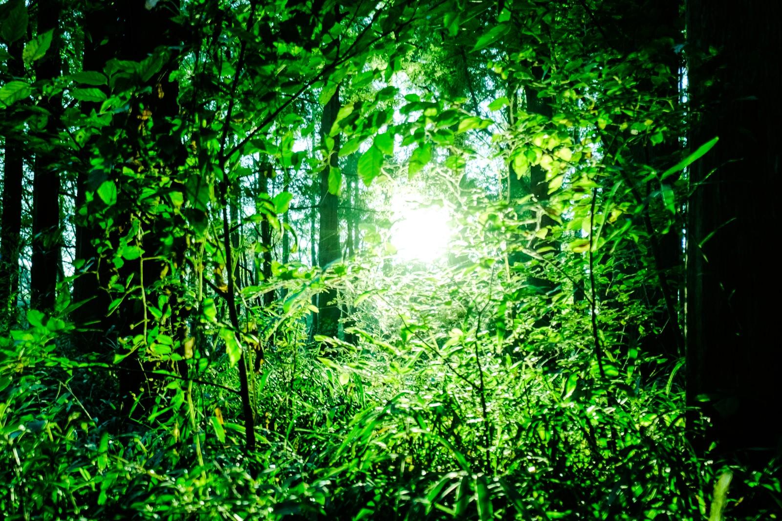 森の中のひかり|ぱくたそフリー素材