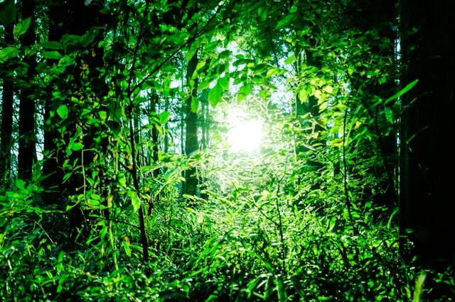森の中のひかりの写真