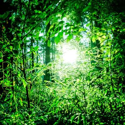 「森の中のひかり」の写真素材