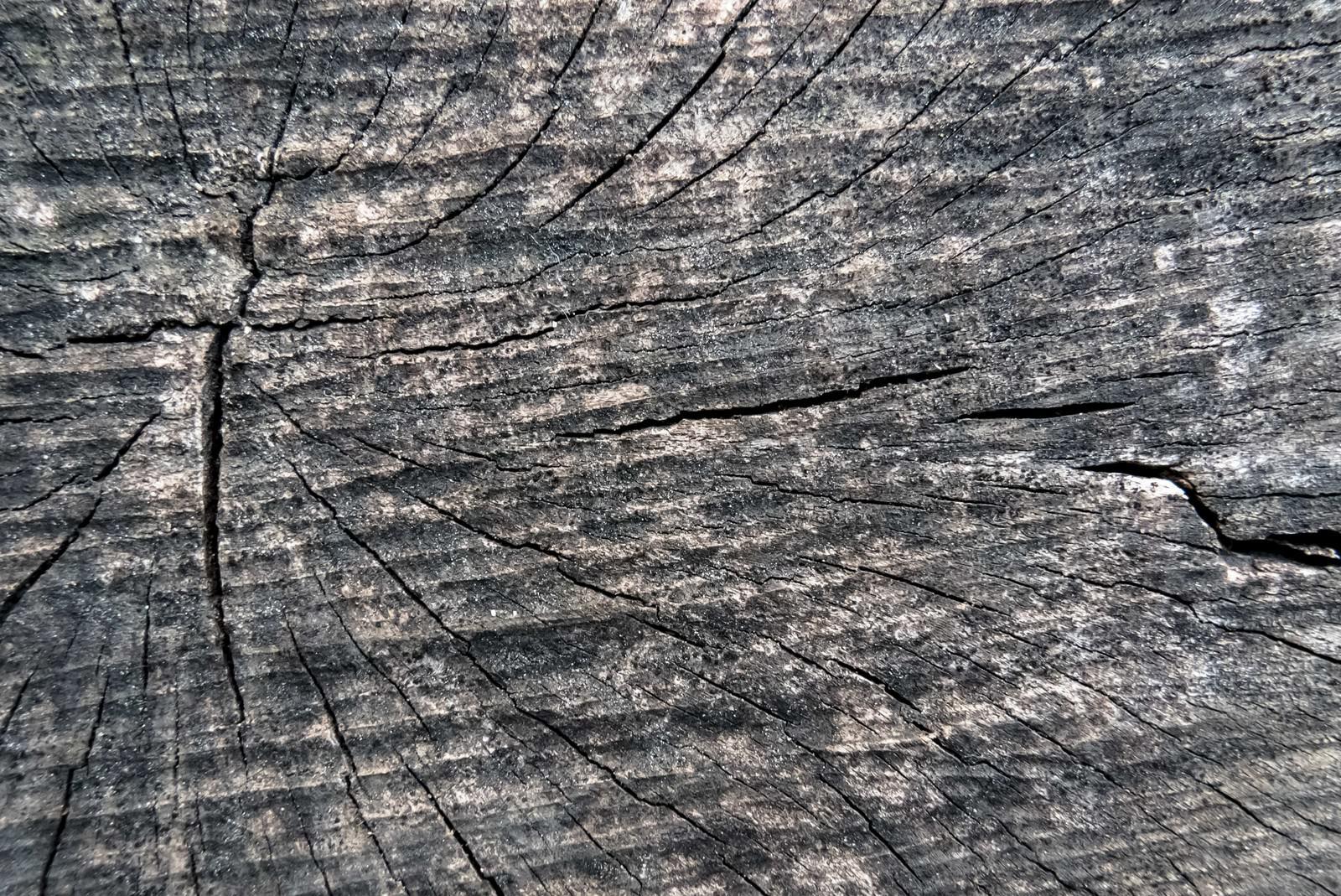 「乾燥割れた木材の表面(テクスチャー)乾燥割れた木材の表面(テクスチャー)」のフリー写真素材を拡大