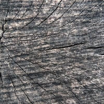 乾燥割れた木材の表面(テクスチャ)の写真