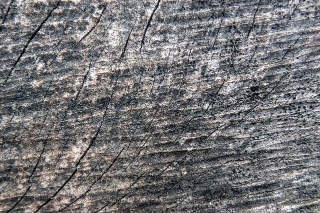 木材にヒビが入る(テクスチャ)の写真