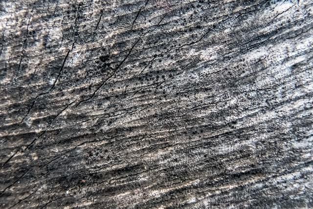 黒く変色した木材の写真