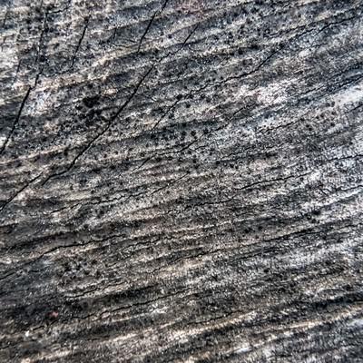 「黒く変色した木材」の写真素材