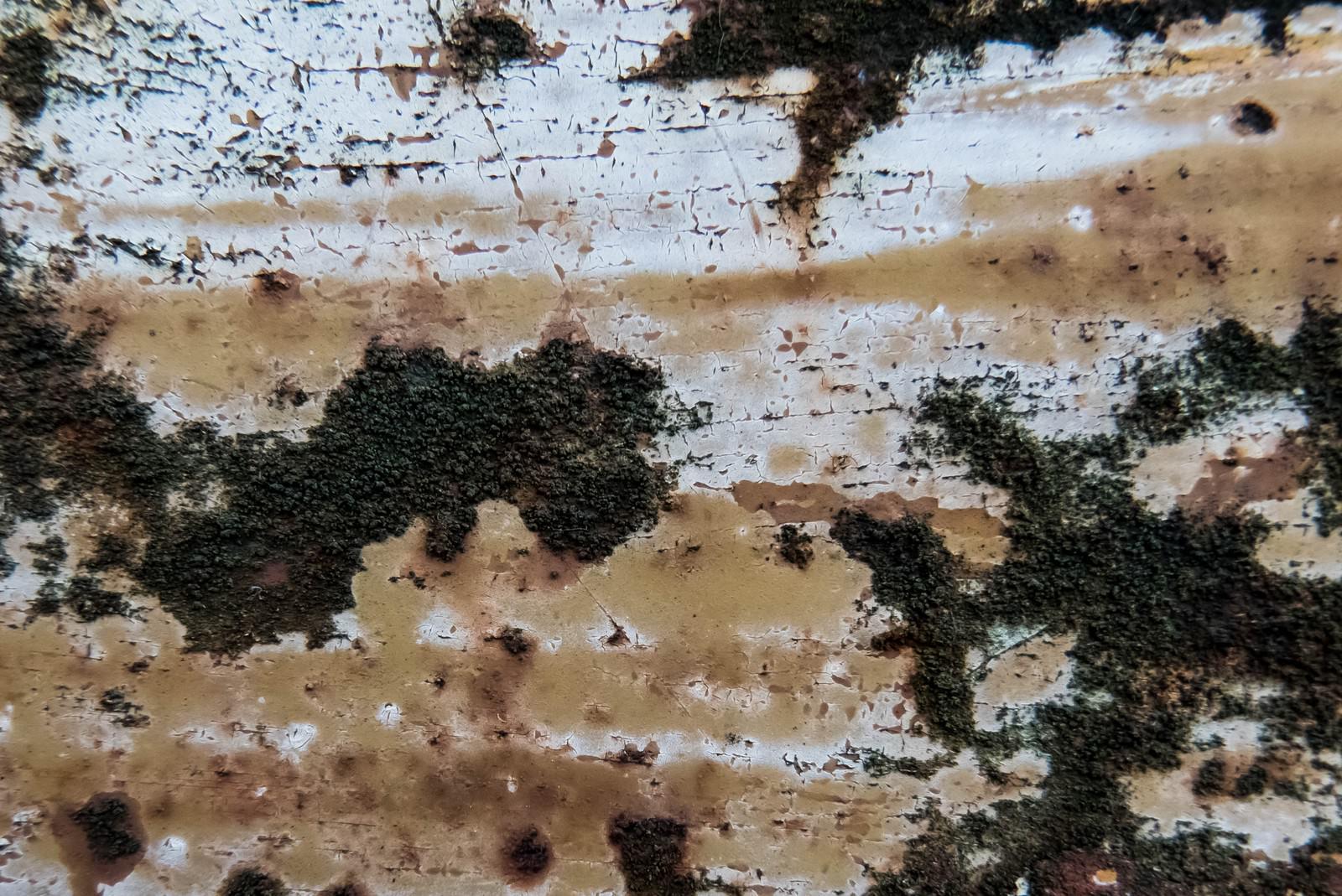 「腐食した壁から苔が生える」の写真