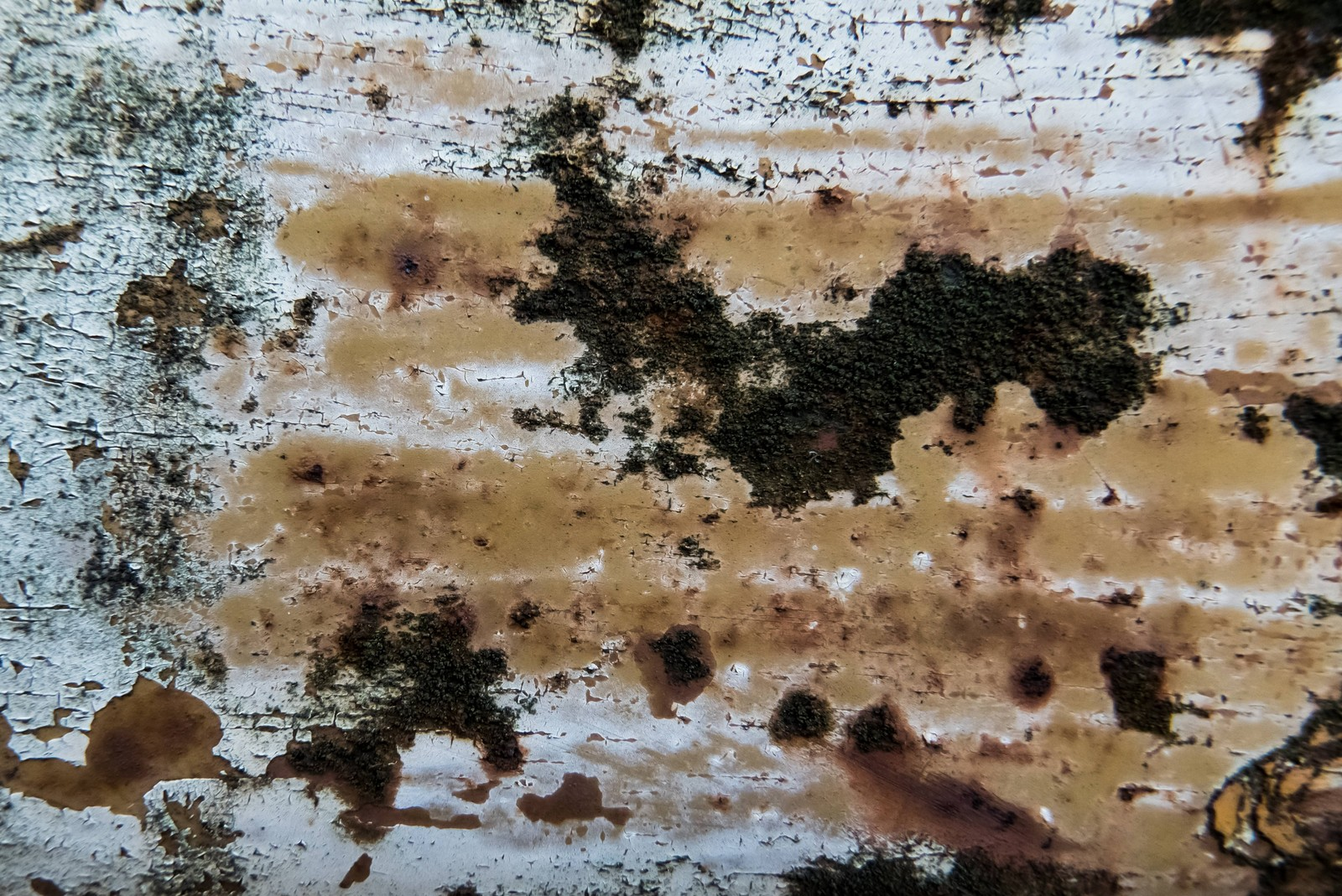 「錆びて塗装がハゲて黴る」の写真