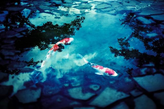 水たまりと鯉(フォトモンタージュ)の写真