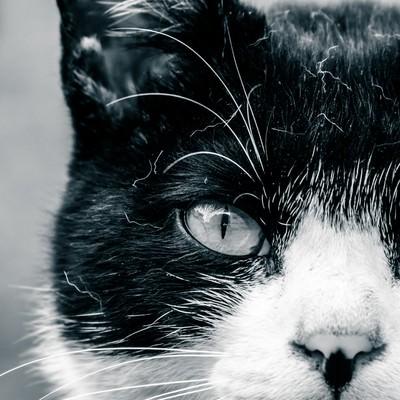 「ブチネコは見た!」の写真素材