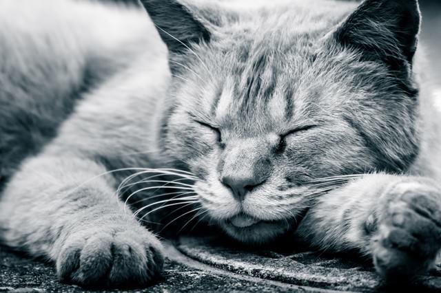 路上で爆睡する猫の写真