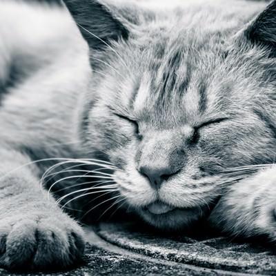 「路上で爆睡する猫」の写真素材