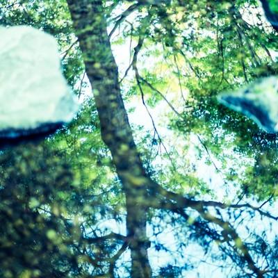 「見上げた木々(縦)」の写真素材