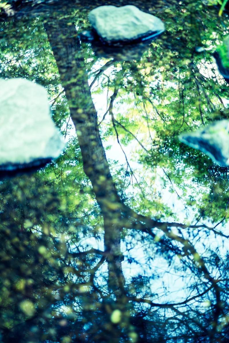 「見上げた木々(縦)」の写真
