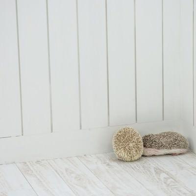 「部屋の隅っこで身を丸めるハリネズミペア」の写真素材