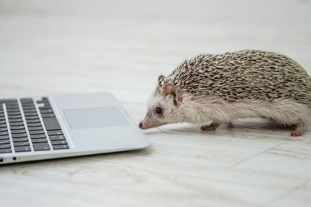 PCで進捗を確認するハリネズミの写真