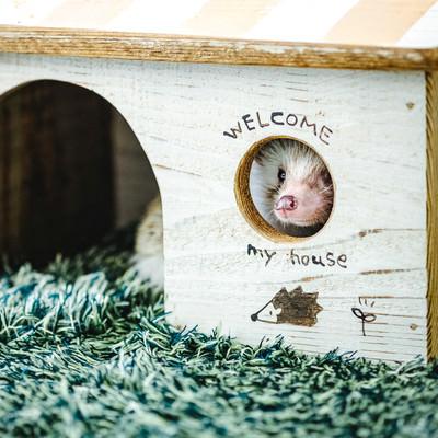 小屋の丸い窓から周りを見るハリネズミの写真