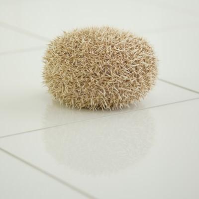 「丸まったハリネズミ」の写真素材