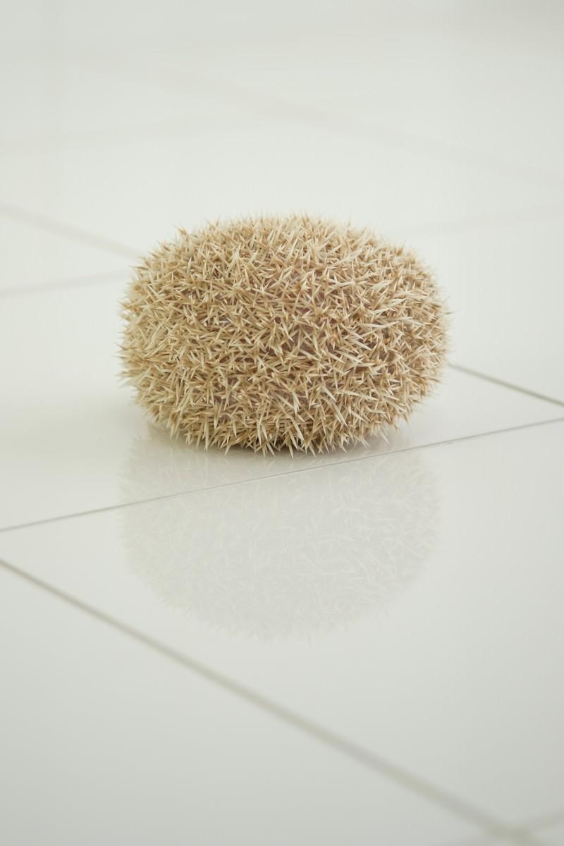 「丸まったハリネズミ」の写真