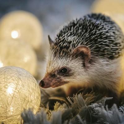 「丸いライトとハリネズミ」の写真素材