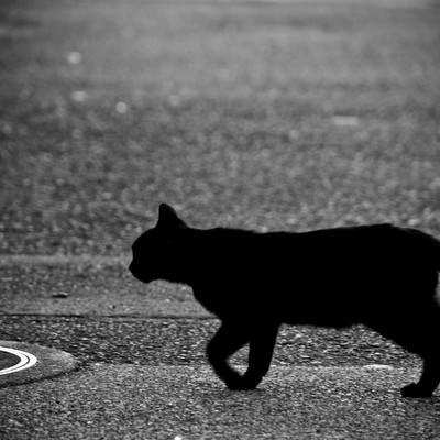 「目の前を横切る黒猫」の写真素材