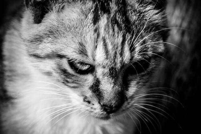 今はカタギ猫の写真