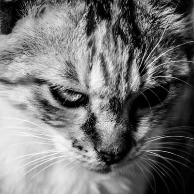 「今はカタギ猫」の写真素材