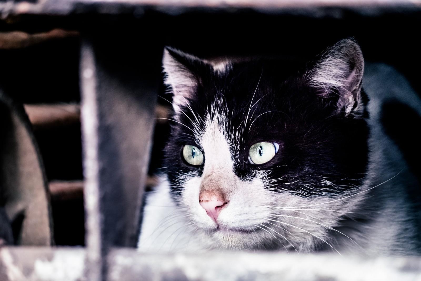 「猫「すべて計画通り」」の写真