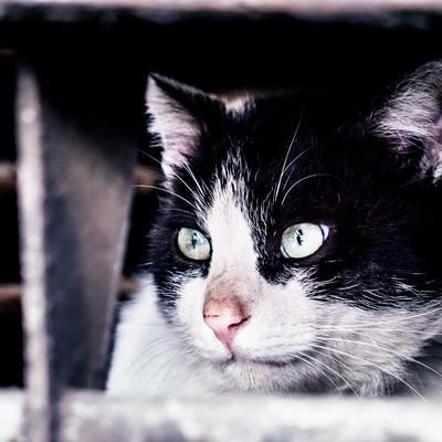 「猫「すべて計画通り」」の写真素材