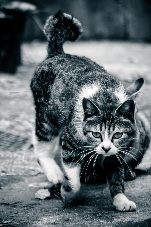 軽い身のこなし猫の写真