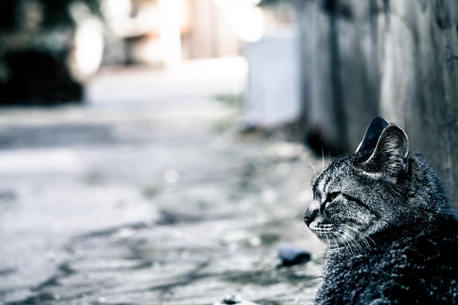 「路上でぼっち猫」の写真