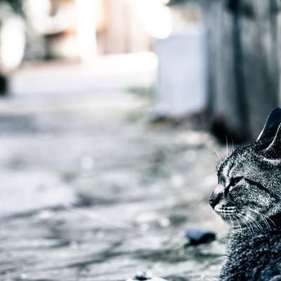 路上でぼっち猫の写真