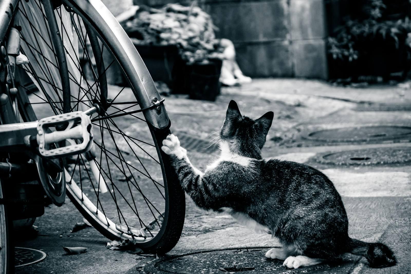 「俺の自転車がパンクした理由 | 写真の無料素材・フリー素材 - ぱくたそ」の写真