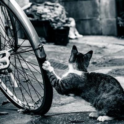 「俺の自転車がパンクした理由」の写真素材