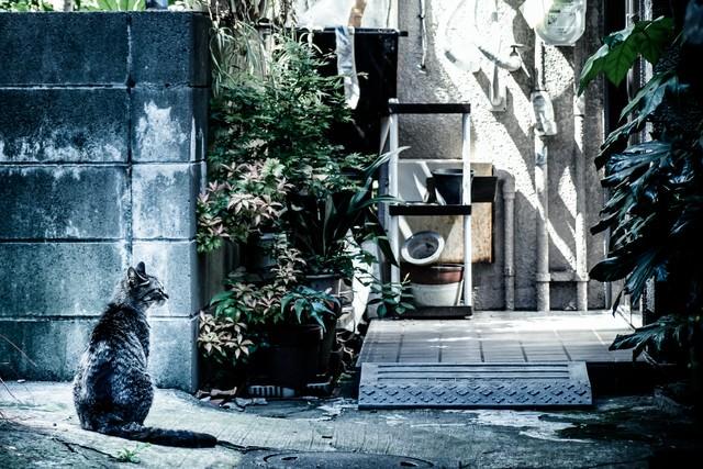 下町の野良猫の写真