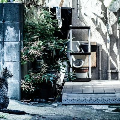 「下町の野良猫」の写真素材