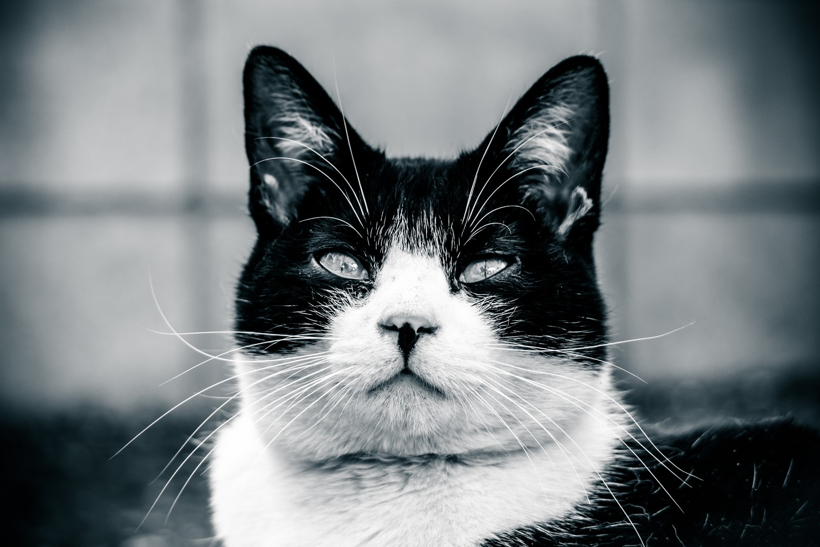 「意識の低いデブ猫」の写真