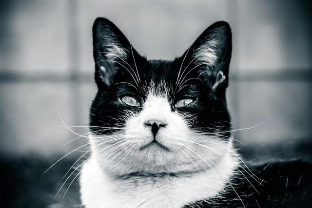 意識の低いデブ猫の写真