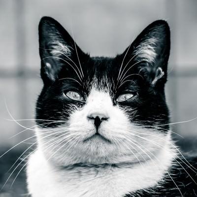「意識の低いデブ猫」の写真素材